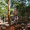 cambodia1_239