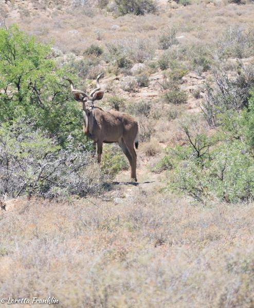 Kudu-25