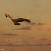 Tawny Eagle -2