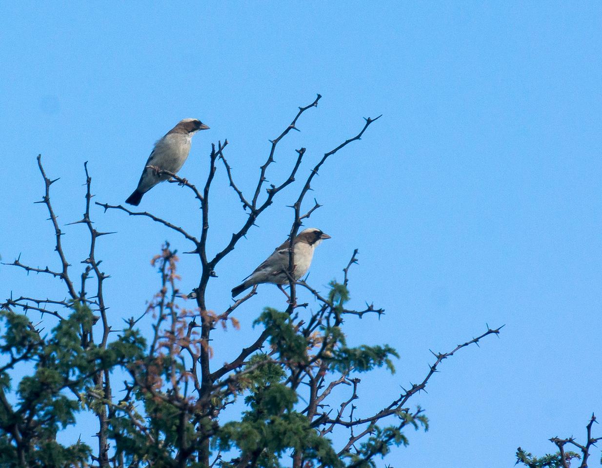 Ewoks Birds (2 of 1)