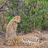 cheetah_2016-42-Edit copy