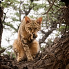 African Wild Cat-2016-18-Edit