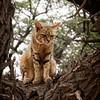 African Wild Cat-2016-25-Edit