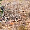 cheetah_2016-43-Edit copy