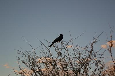 Baobab Mar 2013-15-114