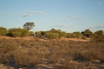 Baobab Mar 2013-13-112