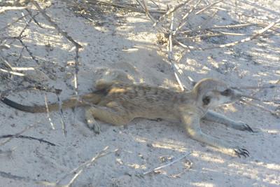 Baobab Mar 2013-2-101