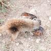 RT_pup_catches_poor_bird_Mar_16_090628