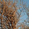 PandoraMr21_2012-4
