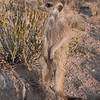 Squeaker Mr 23 2012-3