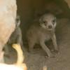 Pups-5