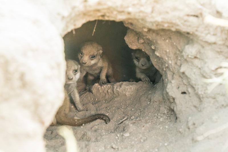 Pups-9