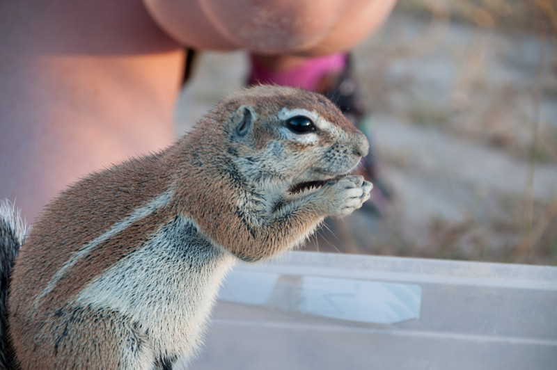 Heather's Ground Squirrels-13
