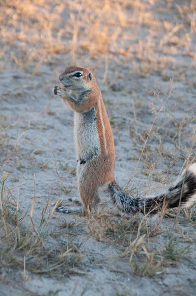 Heather's Ground Squirrels-15
