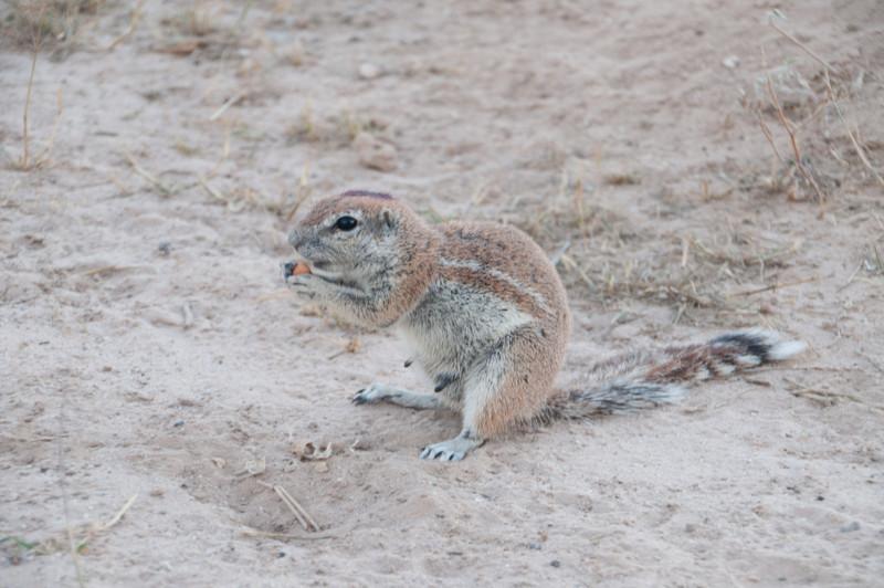 Heather's Ground Squirrels-9