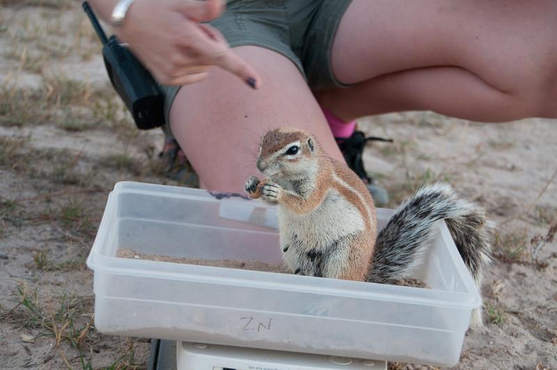 Heather's Ground Squirrels-6