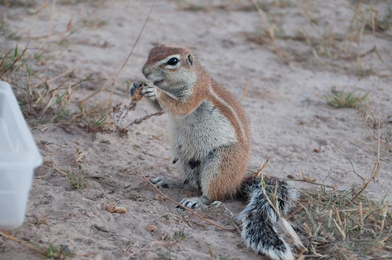 Heather's Ground Squirrels-10