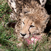 Van_Dyk_Cheetah_Reserve_03_23_155108-1