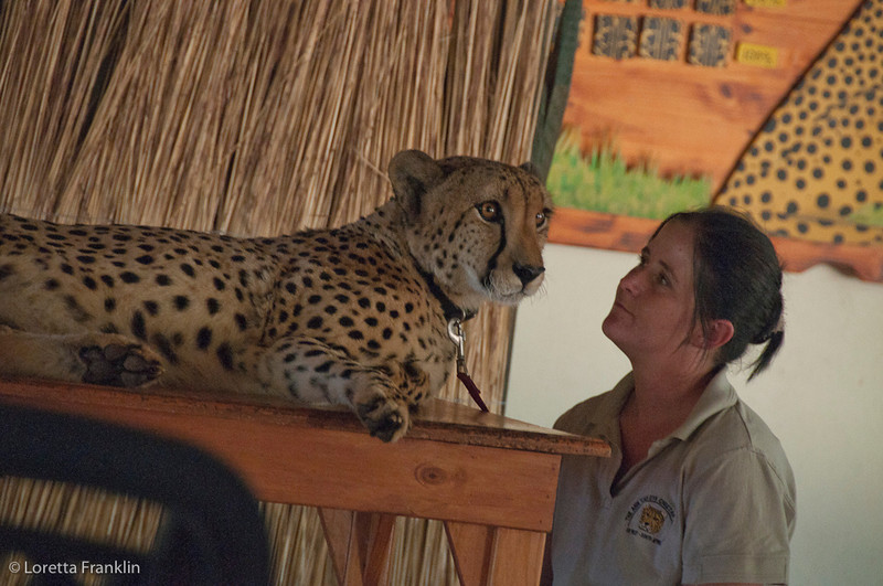 Van_Dyk_Cheetah_Reserve_03_23_140557