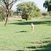 Cheetah_Run_03_24_082038-1