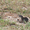 Drie_Doring_Squirrel_Mar_15_091602