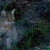 Van_Dyk_Cheetah_Reserve_03_23_143654