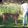 Cheetah_Run_03_24_081545