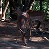 Van_Dyk_Cheetah_Reserve_03_23_155723