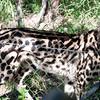 Van_Dyk_Cheetah_Reserve_03_23_145217