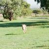 Cheetah_Run_03_24_082038