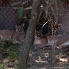 Van_Dyk_Cheetah_Reserve_03_23_144955