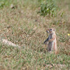 Drie_Doring_Squirrel_Mar_15_093811