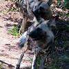 Van_Dyk_Cheetah_Reserve_03_23_152436-1