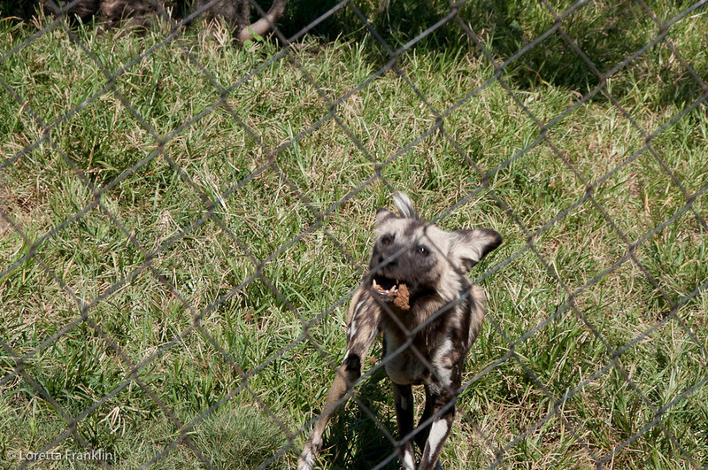 Van_Dyk_Cheetah_Reserve_03_23_151553