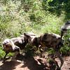 Van_Dyk_Cheetah_Reserve_03_23_153053