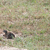 Drie_Doring_Squirrel_Mar_15_091554
