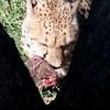 Van_Dyk_Cheetah_Reserve_03_23_154932