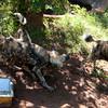 Van_Dyk_Cheetah_Reserve_03_23_153057-1