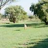 Cheetah_Run_03_24_082037-2