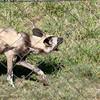 Van_Dyk_Cheetah_Reserve_03_23_151529