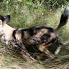 Van_Dyk_Cheetah_Reserve_03_23_152509-1