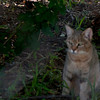 Van_Dyk_Cheetah_Reserve_03_23_143705