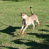 Cheetah_Run_03_24_082039