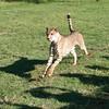 Cheetah_Run_03_24_082039