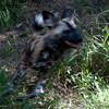 Van_Dyk_Cheetah_Reserve_03_23_152455