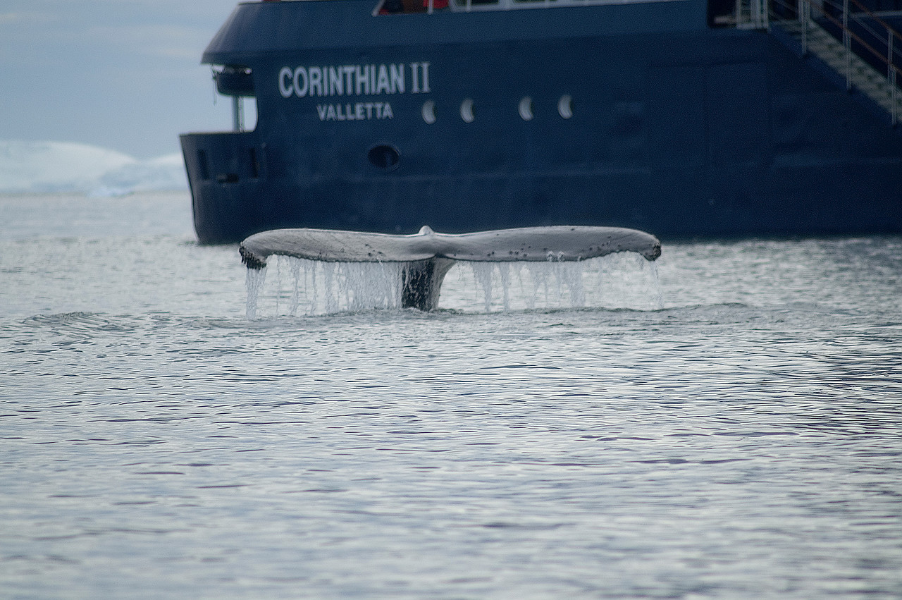 Humpback and the Corinthian from a Zodiac.