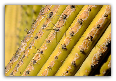 Diagonal-Cactus