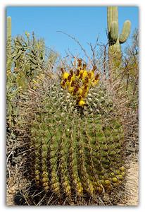 Colorful-Cactus