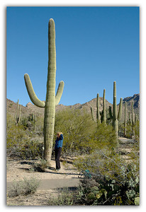 Thats-a-tall-Cactus