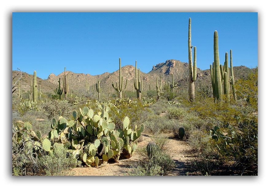 Cactus-Scape